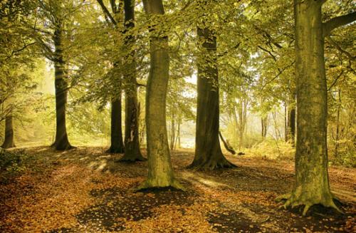 01 foto trees bomen julien van de hoef