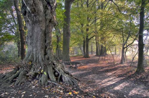 02 foto trees bomen julien van de hoef