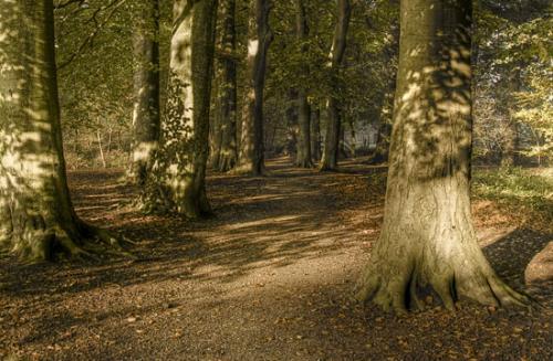 03 foto trees bomen julien van de hoef