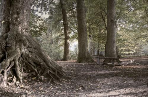 05 foto trees bomen julien van de hoef