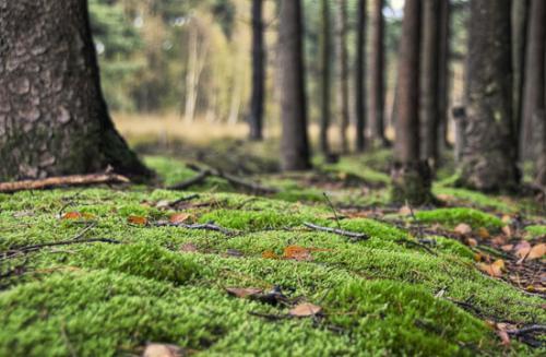 07 foto trees bomen julien van de hoef