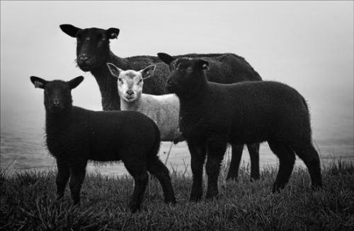 10 foto animals julien van de hoef