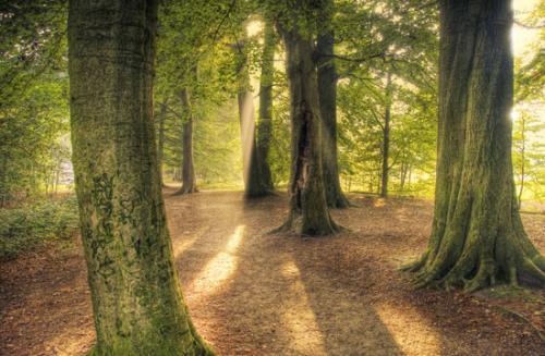 10 foto trees bomen julien van de hoef