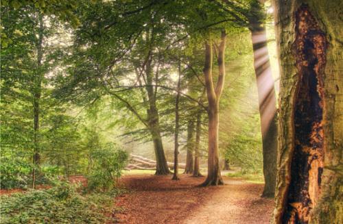 11 foto trees bomen julien van de hoef