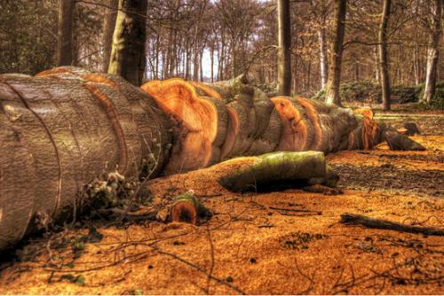 12 foto trees bomen julien van de hoef