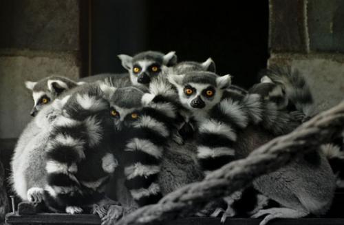 14 foto animals julien van de hoef