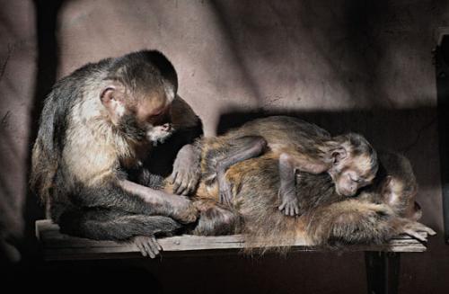 16 foto animals julien van de hoef