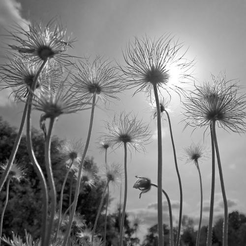 Black and white Zwart wit - Juliën van de Hoef fotografie 6
