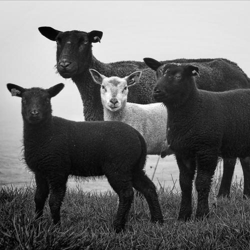 Zwart wit - Juliën van de Hoef fotografie 48