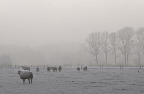 winter randmeren julien van de hoef 07