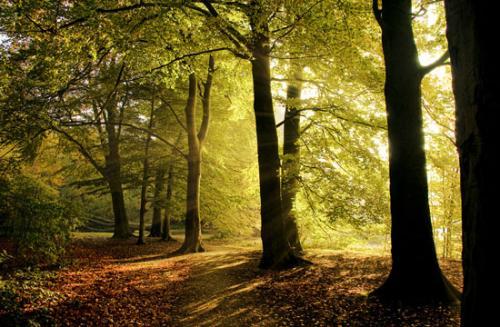 04 foto trees bomen julien van de hoef