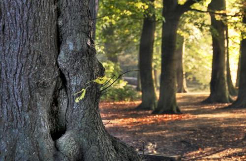 06 foto trees bomen julien van de hoef