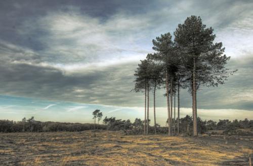 09 foto trees bomen julien van de hoef