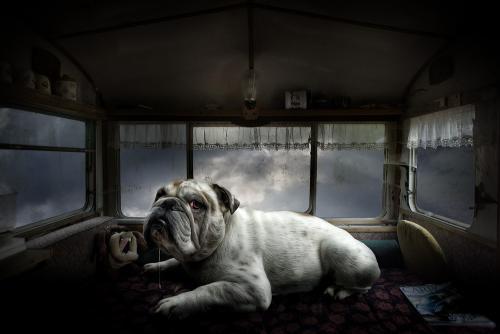 Creative Fotography-Juliën van de Hoef 15