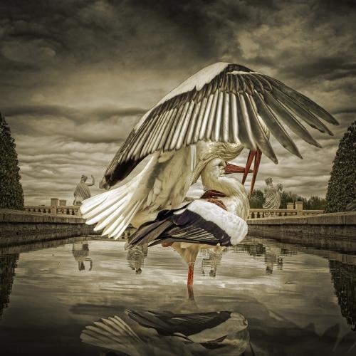 Creative Fotography-Juliën van de Hoef 33