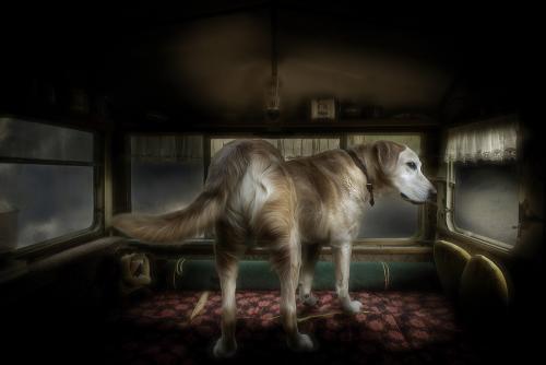 Juliën van de Hoef dog keeper 5